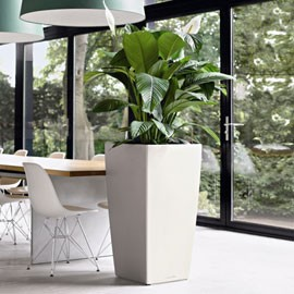 Location de plantes - Bac plantes interieur design ...